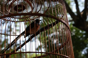 caged bird 2